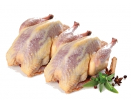 Wild Partridge (2 Oven Ready Birds)